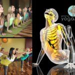 Anatomy - Prana Yoga Studio